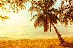 Silhouet cocomut palm met zonneschijn bij kuststrand Royalty-vrije Stock Fotografie
