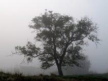 Silhouet de la niebla y del árbol Imagenes de archivo