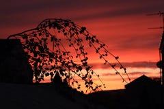 Silhouet in de schemer Royalty-vrije Stock Afbeeldingen
