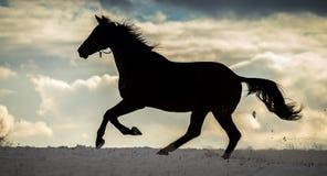 Silhouet die van groot paard in de sneeuw met dramatische bewolkte hemel lopen royalty-vrije stock foto's