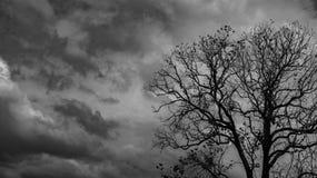 Silhouet dode boom op donkere dramatische grijze hemel en wolkenachtergrond voor eng, dood, en vredesconcept Halloween-dag stock fotografie