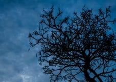 Silhouet dode boom op donkere hemelachtergrond voor eng of dood Stock Fotografie