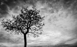 Silhouet dode boom op donkere hemelachtergrond voor eng of dood Stock Afbeeldingen