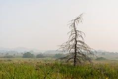 Silhouet droge sparren op weide en luchtperspectief van surr Stock Foto's