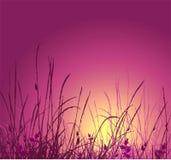 Silhouet en de zonsondergang van het gras het vector stock illustratie