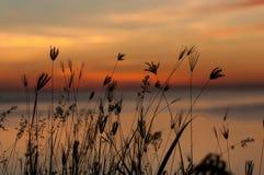 Silhouet Grasrijke Zonsopgang Stock Foto's
