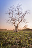 Silhouet lichte bomen Royalty-vrije Stock Foto