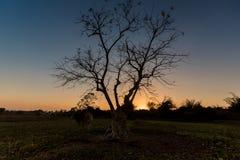 Silhouet lichte bomen Stock Afbeeldingen