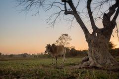Silhouet lichte bomen Royalty-vrije Stock Fotografie