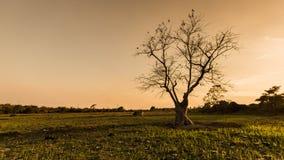 Silhouet lichte bomen Stock Fotografie