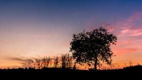 Silhouet lichte bomen Stock Afbeelding