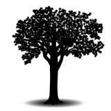 Silhouet losgemaakte boomsycomoor met bladeren stock illustratie