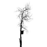 Silhouet oude droge boom met het starling van huis Royalty-vrije Stock Foto's