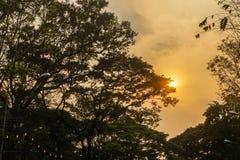 Silhouet reuze lange boom in park in oranje zonsondergang Stock Fotografie