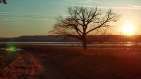 Silhouet Solitaire boom in gouden zonsondergang silhouet van een eenzame boom op de zonsondergang mooi landschap van de aardweg stock videobeelden
