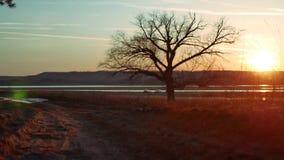 Silhouet Solitaire boom in gouden zonsondergang silhouet van een eenzame boom op de zonsondergang mooie levensstijl van de aardwe stock videobeelden