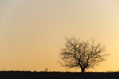 Silhouet van één enkele boom. Stock Foto's