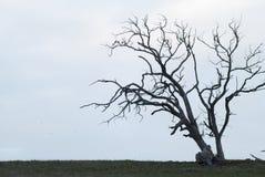 Silhouet van één enkele boom Royalty-vrije Stock Foto's