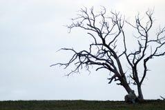 Silhouet van één enkele boom Stock Afbeelding
