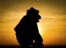 Silhouet van aap stock fotografie