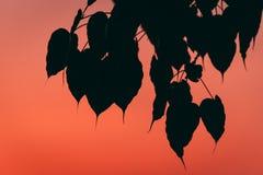 Silhouet van blad bij zonsondergang Royalty-vrije Stock Afbeelding