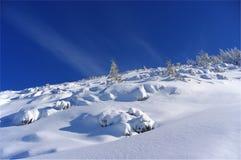 Silhouet van bomen in de winter op een achtergrond van blauwe hemel Royalty-vrije Stock Foto's