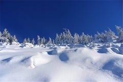 Silhouet van bomen in de winter op een achtergrond van blauwe hemel Royalty-vrije Stock Afbeeldingen