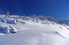 Silhouet van bomen in de winter op een achtergrond van blauwe hemel Royalty-vrije Stock Foto