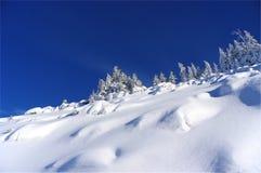Silhouet van bomen in de winter op een achtergrond van blauwe hemel Stock Fotografie