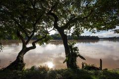 Silhouet van bomen door een rivierband stock afbeelding