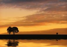 Silhouet van bomen en Bezinningen over het water. Royalty-vrije Stock Afbeeldingen