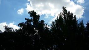 Silhouet van bomen en hemel Stock Afbeelding