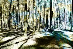 Silhouet van bomen en herfstbladeren met veelvoudige blootstelling e royalty-vrije stock foto's