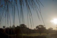 Silhouet van bomen met een zonnige hemelachtergrond Royalty-vrije Stock Fotografie
