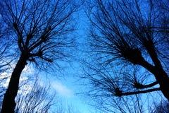 Silhouet van boom Stock Foto's