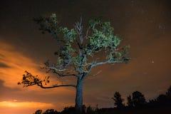 Silhouet van boom door flitslicht onder de nachthemel wordt aangestoken met c dat stock foto's