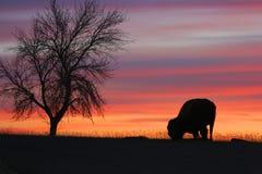 Silhouet van boom en eenzame bizon Royalty-vrije Stock Afbeelding