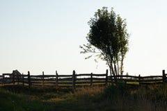 Silhouet van boom en houten omheining Stock Afbeeldingen