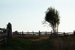 Silhouet van boom en houten omheining Royalty-vrije Stock Afbeeldingen
