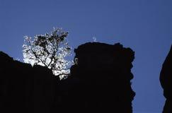 Silhouet van boom en rotsen stock afbeeldingen