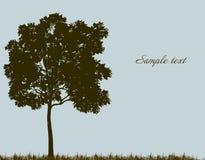 Silhouet van boom met gras. Vector Royalty-vrije Stock Fotografie