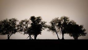 Silhouet van boom, struik met naakte takken De boom van het de winterlandschap Royalty-vrije Stock Foto