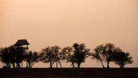 Silhouet van boom, struik met naakte takken De boom van het de winterlandschap Stock Afbeeldingen