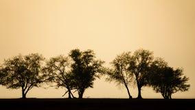 Silhouet van boom, struik met naakte takken De boom van het de winterlandschap Royalty-vrije Stock Afbeeldingen