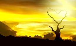 Silhouet van boomtak die het hartsymbool maken tegen een galant Stock Afbeeldingen