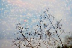 Silhouet van boomtakken met zonsondergang en sneeuwvlokkeneffect Stock Foto's