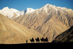 Silhouet van caravanreizigers die de Vallei Ladakh, India berijden van kamelennubra stock afbeelding