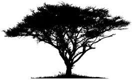 Silhouet van de boom Afrikaanse savanne Stock Foto's