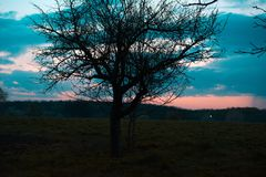 Silhouet van de boom tegen de achtergrond van de de lentehemel stock foto