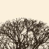 Silhouet van de boomtakken stock illustratie